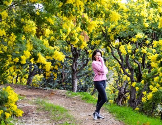 La-route-des-Mimosas